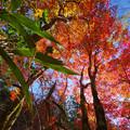 紅葉の渓谷2