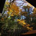 神社の秋景色