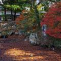 Photos: 晩秋の庭