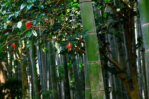 竹林の髪飾り