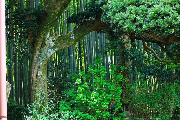 竹林のある風景