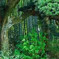 写真: 竹林のある風景