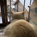 Photos: 雪を見てる後頭部