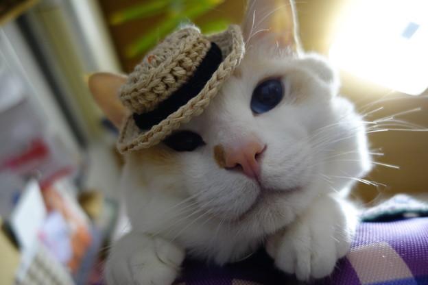 ミニカンカン帽乗っけてみた!