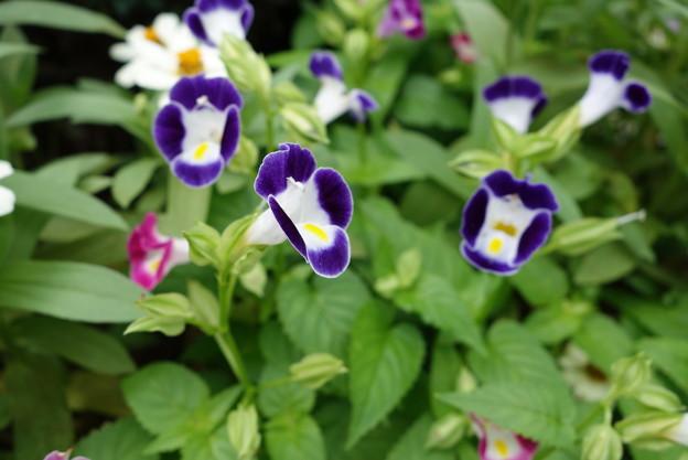 花壇花その3