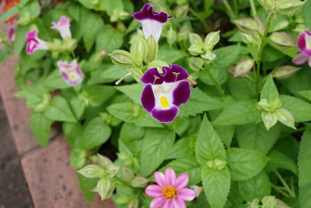 花壇花その5