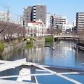 写真: 大岡川のカモメ