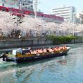 写真: 桜もそろそろ散り始め・・・