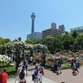 Photos: GWの山下公園