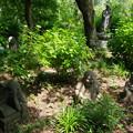 写真: 浄慶寺(柿生)の羅漢像