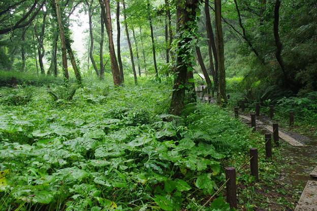 雨上がりの森