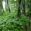 写真: 雨上がりの森