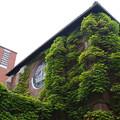 写真: 煉瓦と蔦