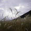 写真: すすき草原