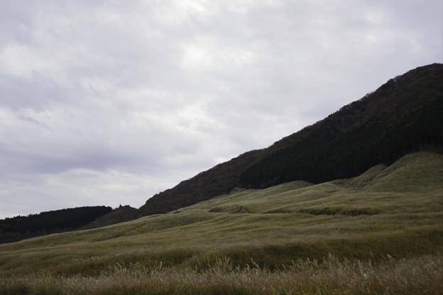 すすき草原