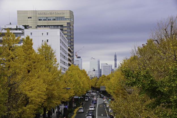 写真: 黄葉の山下公園通り