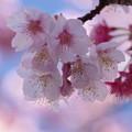 写真: 春近し!