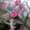 雨の東慶寺