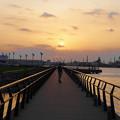 Photos: 夕陽に向かって
