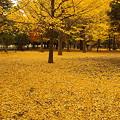 Photos: 代々木公園の森(その2)