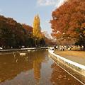 Photos: 代々木公園の森(その1)