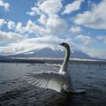 写真: 富士山にキス