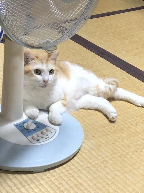 扇風機のモーター音が好き?