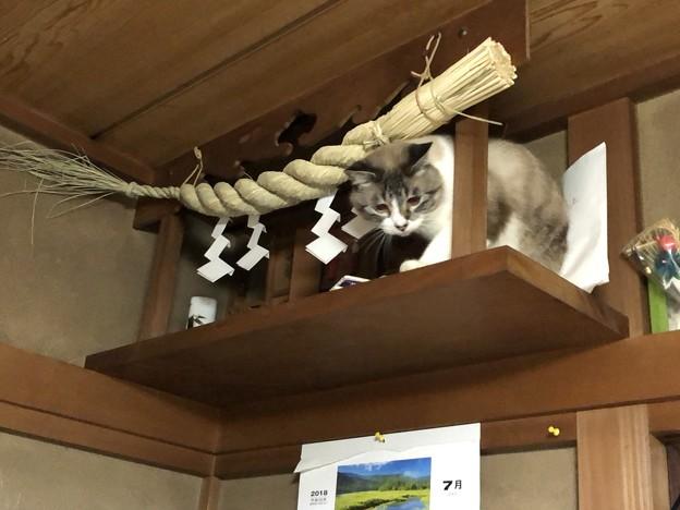 罰当たりな猫