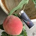 裏庭の桃の?一番!