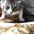 Photos: メバルの煮付けを狙う   たら