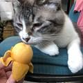 Photos: 猫は枇杷なんか   どうでもいい