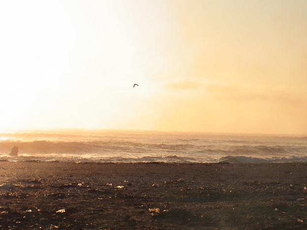 Photos: 明けの空に飛ぶ