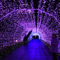 写真: イルミのトンネル