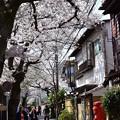 写真: 二階堂の桜