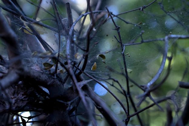写真: 蜘蛛の巣宇宙