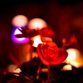 写真: 暗闇に咲く花