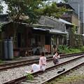 Photos: にゃんこと線路とインスタ映え