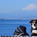 写真: ワンコと富士山