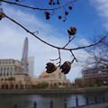 Photos: 春なのに1