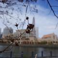 Photos: 春なのに2