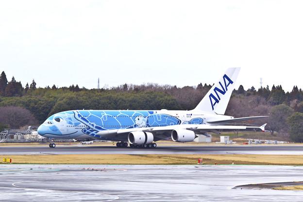 ANA  A380「FLYING HONU」