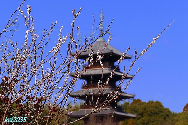 ネコヤナギ&五重塔