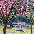 写真: 里山風景