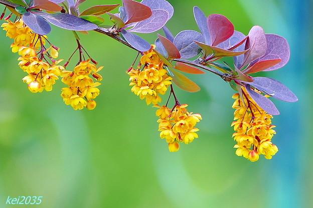 熊山英国庭園の花々