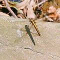 写真: 蜻蛉&影