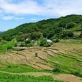 写真: 上山地区の棚田風景