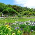 Photos: 住心院の菖蒲園