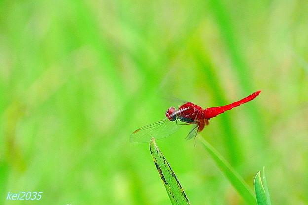 蜻蛉の飛翔NO.3