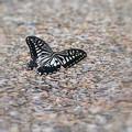 蝶の低空飛行