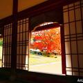 写真: 旧閑谷学校の楷の木 No.6